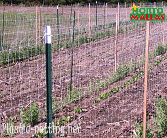 Support Netting like HORTOMALLAS are a great aid to farmers against phytopathogens.