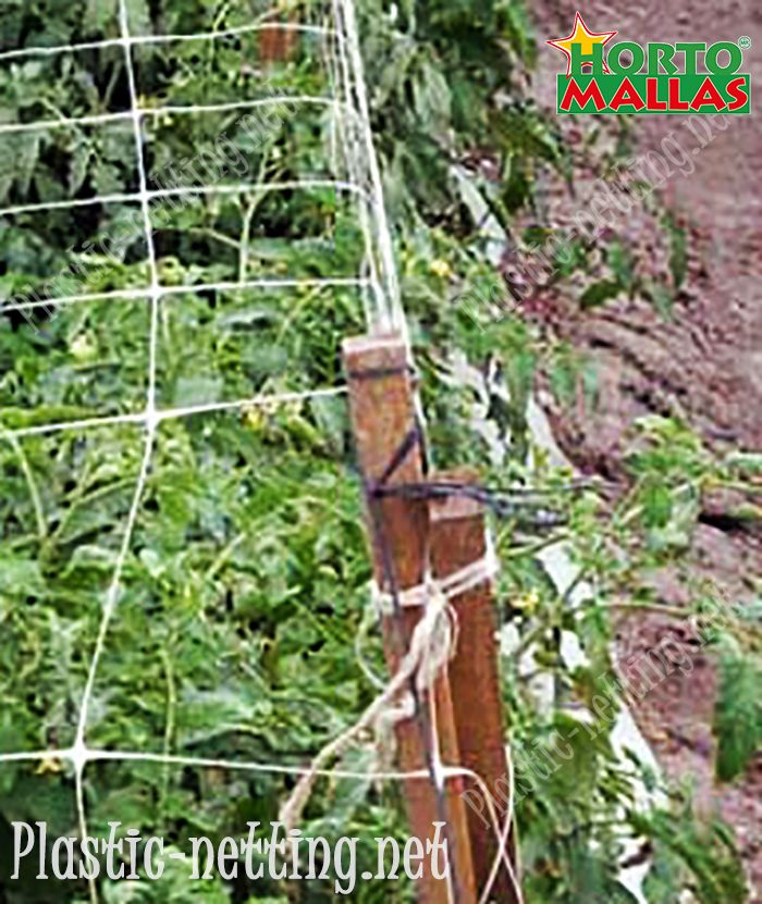 Using HORTOMALLAS support netting reduces contact with the plants whilst tutoring.