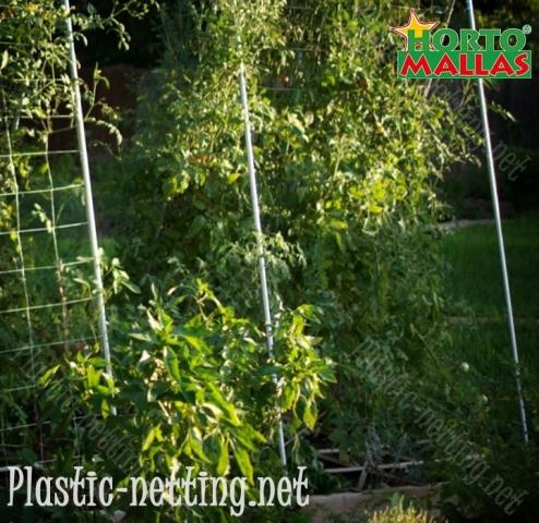 HORTOMALLAS trellis netting keeps phytopathogens