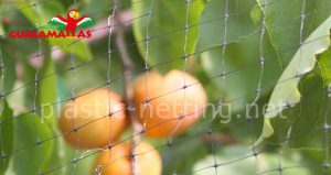 peaches tree using bird net