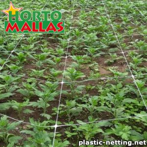Plastic netting installed on the crops